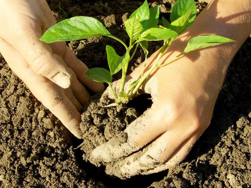 Entretien jardin pessac m rignac cestas for Entreprise de jardinage